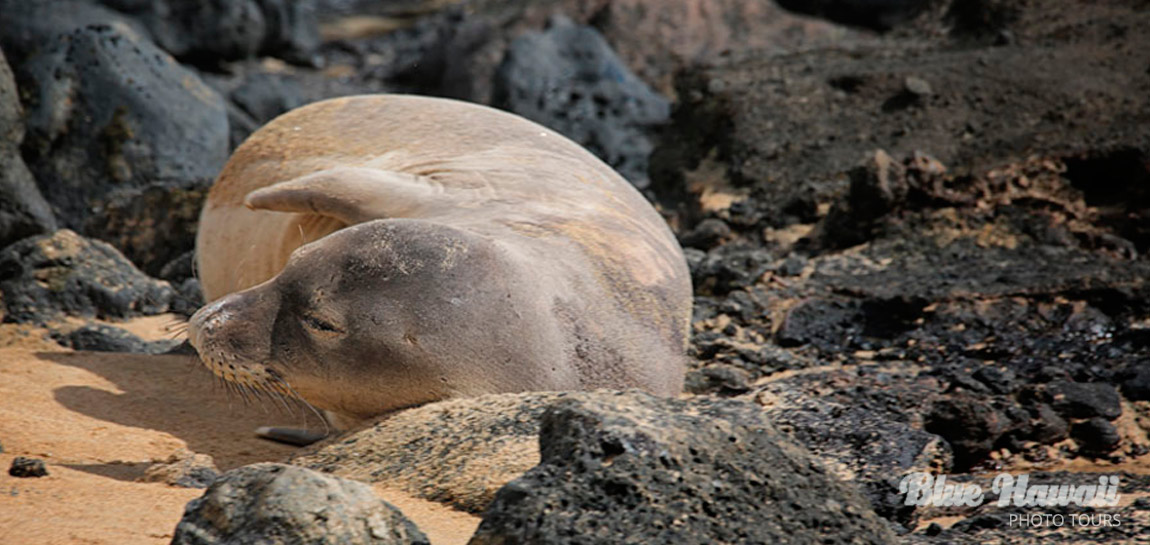 home-slide-baby-monk-seal