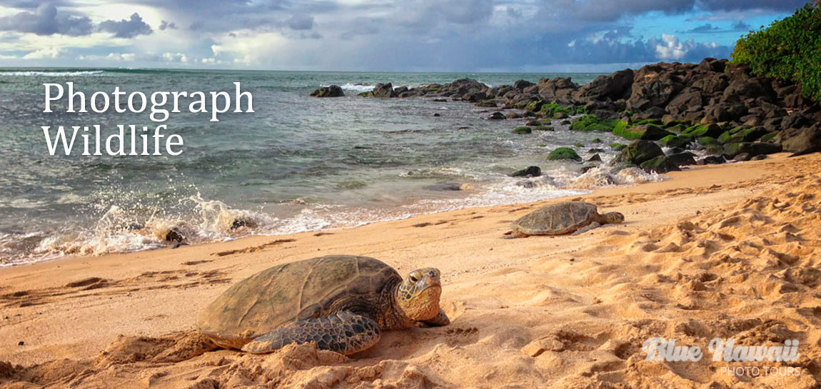 home-slide-turtle